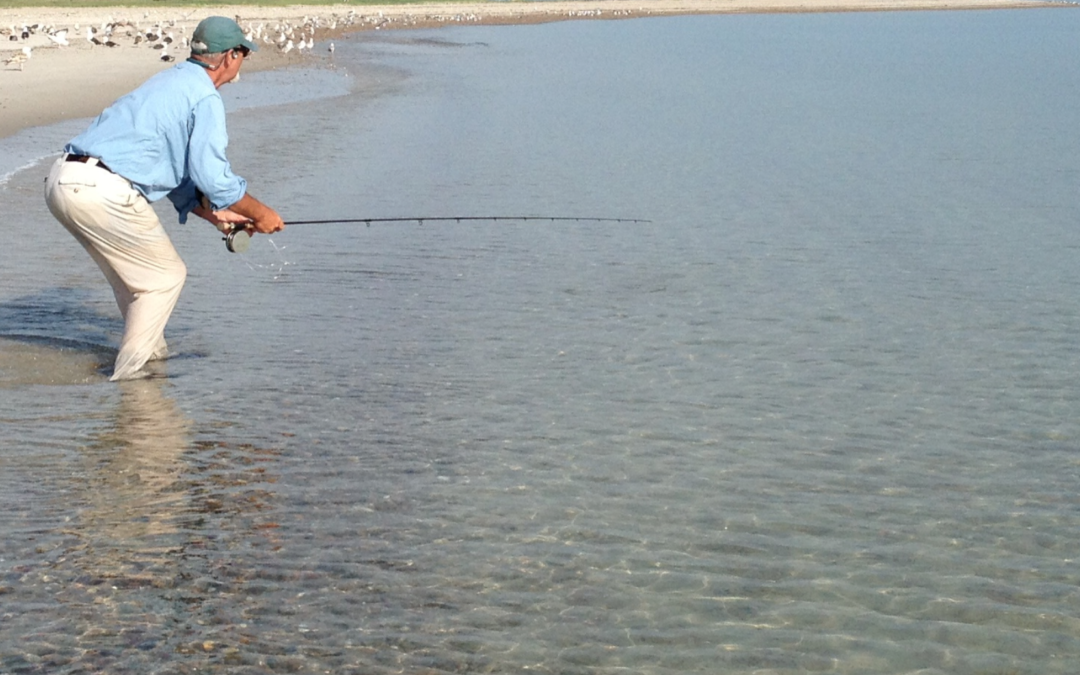 Seeing on the flats tail fly fishing magazine for Saltwater fly fishing magazine