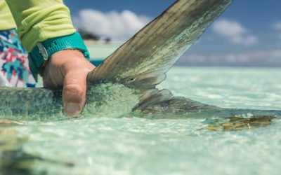 Milkfish on the Fly