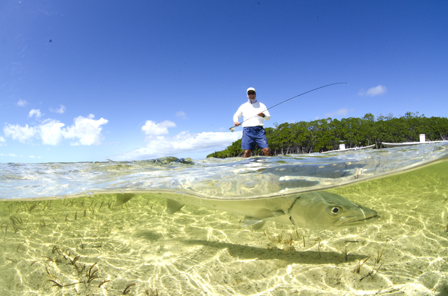 saltwater fly fishing magazine - barracuda on the fly