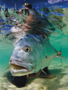 Gt behavior hangouts tail fly fishing magazine for Saltwater fly fishing magazine