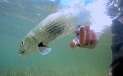 Fishing for the Future: Ecology, Economics, andthe Conversation We Can't Avoid