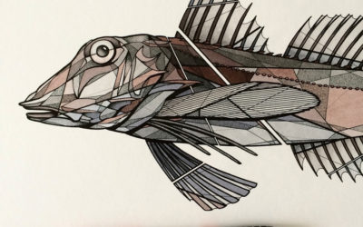 Teuthis – Fish Art