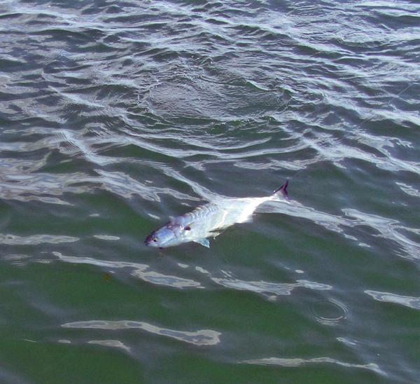 fly fishing magazines