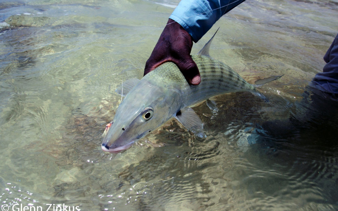 How To Catch A Bonefish