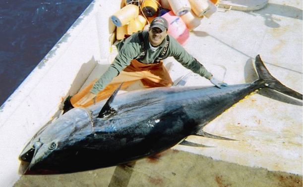 Is lab-grown Bluefin tuna going to help stop overfishing?