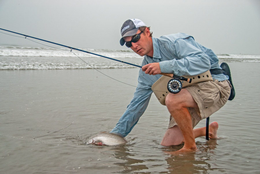 saltwater fly fishing for corbina in the surf 2